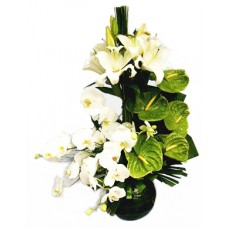 Antoryum, Orkide ve Lilyumlar