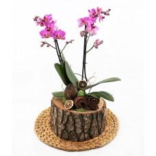Doğal Kütükte Orkide