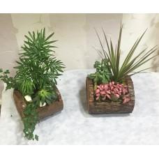 Kütük Saksıda Saksı Bitkileri