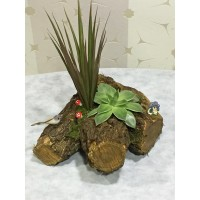 Kütükte Saksı Bitkileri