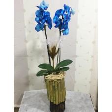 Bambu Saksıda Mavi Orkide