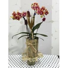 Kütük Bambu Saksıda Orkide