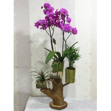 Kütük Üzeri Orkide Aranjman