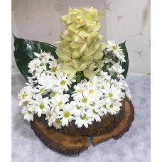 Kütük Üzeri Orkide Aranjmanı