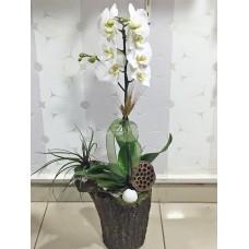 Kütük Üzeri Beyaz Orkide