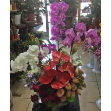Lüks Orkide Aranjmanı
