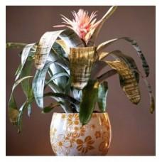 Saksıda Achmea Çiçeği