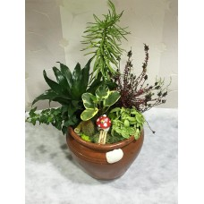 Toprak Saksıda Saksı Bitkileri