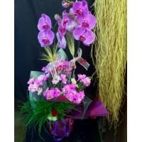 Saksıda Orkideler