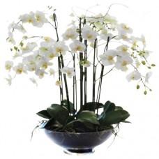 Saksıda Beyaz Orkide Aranjman