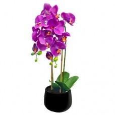 Saksıda Mor, Pembe Orkide