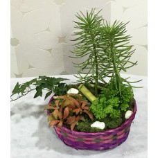 Sepette Canlı Bitkiler Aranjman