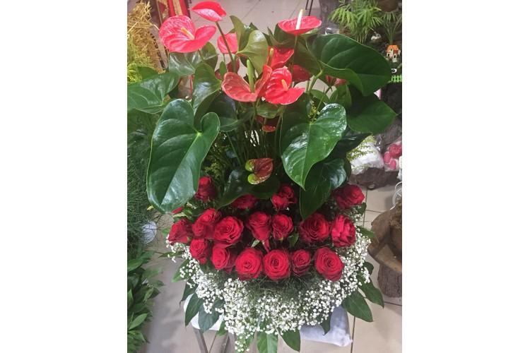 Antoryum ve Kırmızı Güller