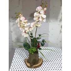 Kütük Saksıda Orkide Aranjman