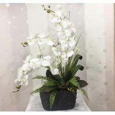 Seramik Vazoda Orkide